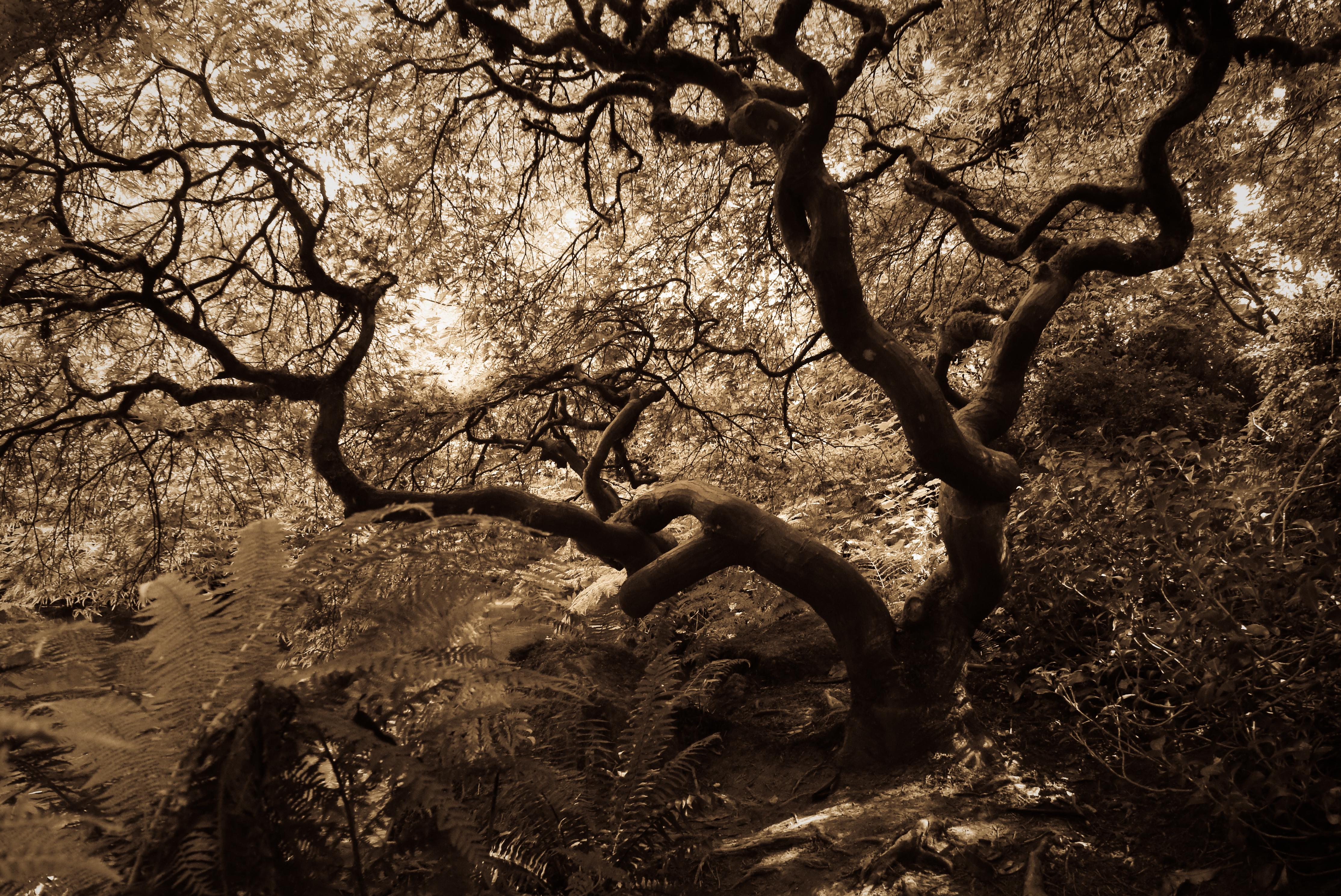 The Kubota Garden, Seattle « bluebrightly