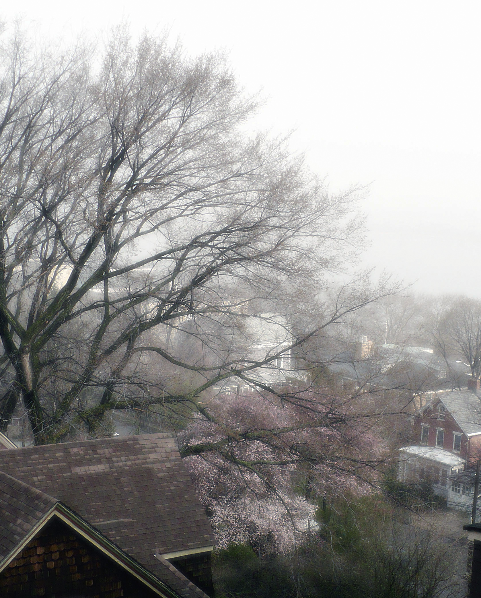 rooftops-fog-april-2