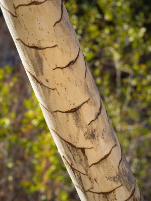 The Yucca's stalk