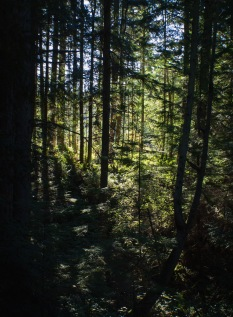 Deception Pass: Forest Light