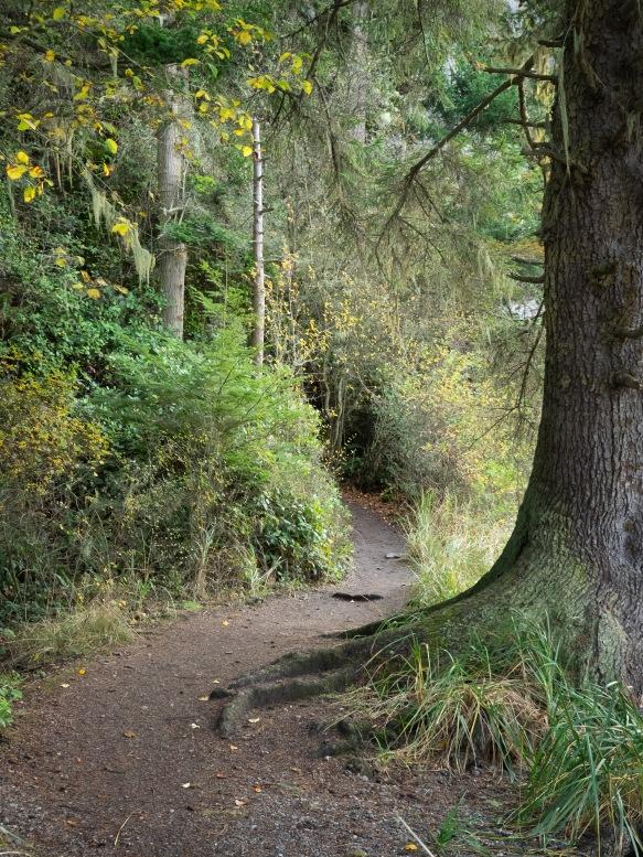 Trail, Bowman Bay